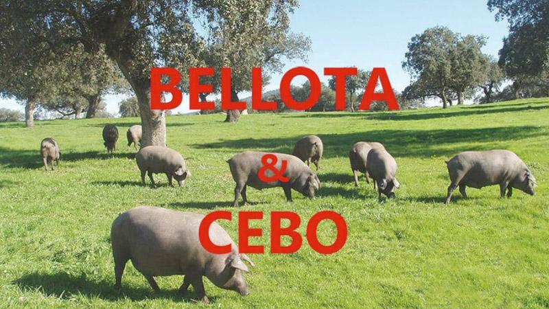Las dos diferencias entre el Jamón Ibérico de Cebo y el de Bellota